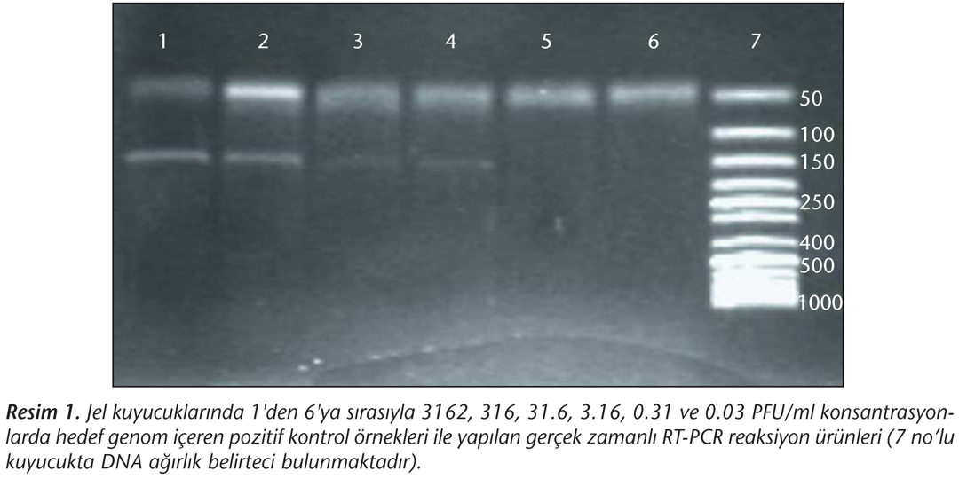 Kan Don 246 Rlerinde Ger 231 Ek Zamanlı Rt Pcr Ile Batı Nil Virusu